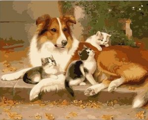 Border Collie dog and kittens