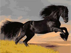 Black stallion horse leaping