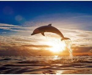 Sunset Dolphin